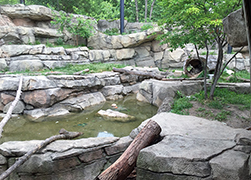 Snow-Leopard-Exhibit-250.jpg